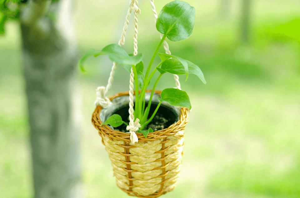Best Levitating Planters